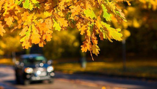 Fall Brings Unique Car Accident Risks